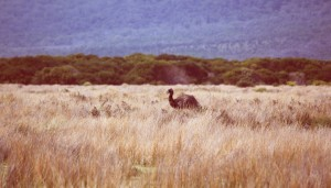 Wilson's Promontory National Park